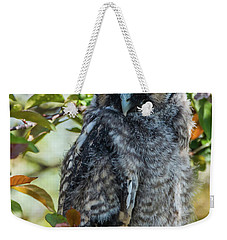 Weekender Tote Bag featuring the photograph Napping Long-eared Owlet by Yeates Photography