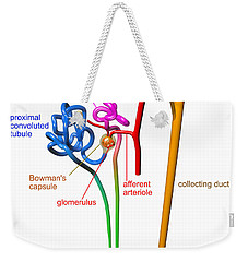 Weekender Tote Bag featuring the digital art Nephron White With Labels by Russell Kightley