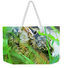 Weekender Tote Bag featuring the photograph Nestling, Juvenile Male American Robin by A Gurmankin