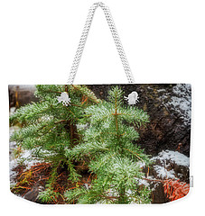 Weekender Tote Bag featuring the photograph New Beginnings by Cat Connor