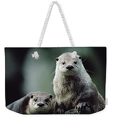 North American River Otter Lontra Weekender Tote Bag