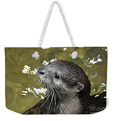 North American River Otter Swimming In A River Weekender Tote Bag