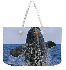 North Atlantic Right Whale Breaching Weekender Tote Bag