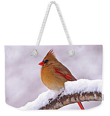 Northern Cardinal In Winter Weekender Tote Bag