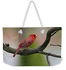 Northern Cardinal Weekender Tote Bag by Living Color Photography Lorraine Lynch