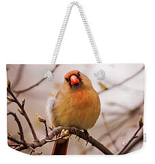 Northern Female Cardinal Pose Weekender Tote Bag by Terry DeLuco