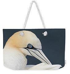 Northern Gannet At Troup Head - Scotland Weekender Tote Bag