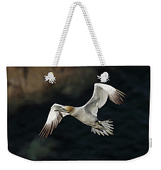 Weekender Tote Bag featuring the photograph Northern Gannet In Flight by Grant Glendinning