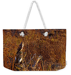 Weekender Tote Bag featuring the photograph Northern Harrier At Sunset by Sharon Talson