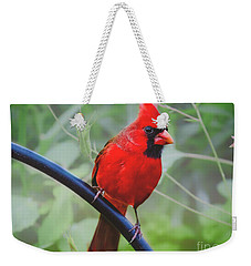 Northern Male Red Cardinal Bird Weekender Tote Bag