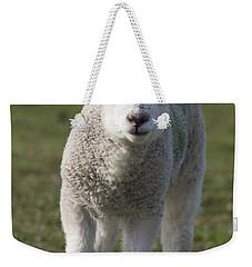 Northumberland, England A White Lamb Weekender Tote Bag