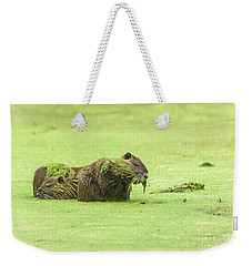 Weekender Tote Bag featuring the photograph Nutria In A Pesto Sauce by Robert Frederick