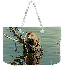 Weekender Tote Bag featuring the photograph Nutria On Stick-up by Robert Frederick