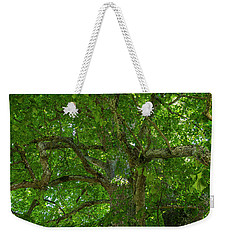 Old Linden Tree. Weekender Tote Bag by Ulrich Burkhalter