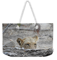 Weekender Tote Bag featuring the photograph On The Lookout by Betty-Anne McDonald
