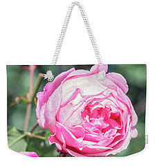 Weekender Tote Bag featuring the photograph One Bold, One Bashful by Linda Lees