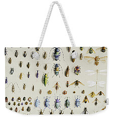 One Hundred And Fifty Insects, Dominated At The Top By A Large Dragonfly Weekender Tote Bag by Marian Ellis Rowan