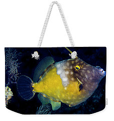 Weekender Tote Bag featuring the photograph Orange Filefish by Jean Noren