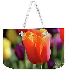Orange Tulip In Franklin Park Weekender Tote Bag