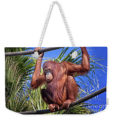 Orangutan On Ropes Weekender Tote Bag