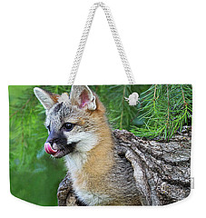 Out Pops A Gray Fox Weekender Tote Bag