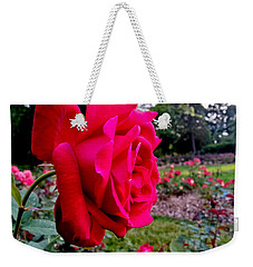 Weekender Tote Bag featuring the photograph Outstanding by Robert Knight