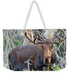 Weekender Tote Bag featuring the photograph Overlooking Moose by Scott Mahon