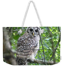 Owl On A Limb Weekender Tote Bag by Donald C Morgan
