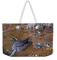 Weekender Tote Bag featuring the photograph Pacific Black Duck Family by Miroslava Jurcik