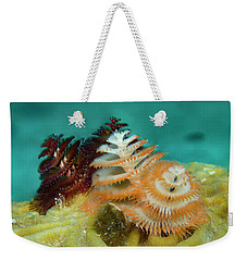 Weekender Tote Bag featuring the photograph Pair Of Christmas Tree Worms by Jean Noren