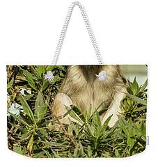 Patas Monkey Weekender Tote Bag by Suzanne Luft