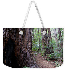 Pathway Through A Redwood Forest On Mt Tamalpais Weekender Tote Bag