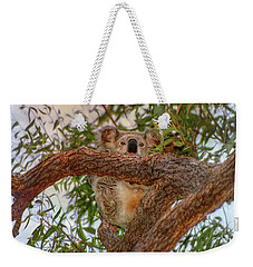 Weekender Tote Bag featuring the photograph Patience Brings Koalas by Hanny Heim