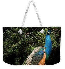 Weekender Tote Bag featuring the photograph Peacock On A Fence by Jean Noren
