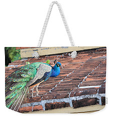 Peacock On Rooftop Weekender Tote Bag