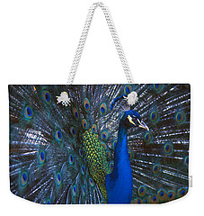 Weekender Tote Bag featuring the photograph Peacock Splendor by Marie Hicks