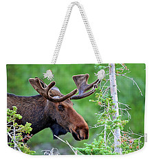 Weekender Tote Bag featuring the photograph Peaking Moose by Scott Mahon