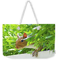 Peek-a-boo Gray Squirrel Weekender Tote Bag