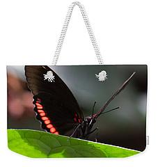 Peek-a-boo 8x10 Weekender Tote Bag