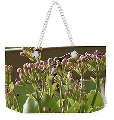 Weekender Tote Bag featuring the photograph Peek A Boo by Anne Rodkin