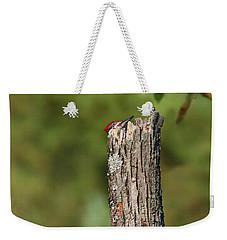 Peek A Boo Pileated Woodpecker Weekender Tote Bag