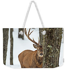 Weekender Tote Bag featuring the photograph Peekaboo.. by Nina Stavlund