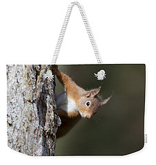 Peekaboo - Red Squirrel #29 Weekender Tote Bag