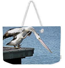 Weekender Tote Bag featuring the photograph Pelican Beauty 66633 by Kevin Chippindall