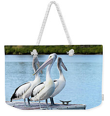 Weekender Tote Bag featuring the photograph Pelicans 6663. by Kevin Chippindall
