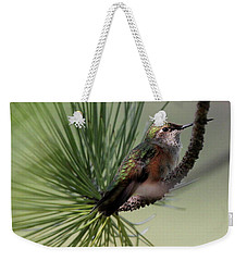 Perched In A Pine Weekender Tote Bag