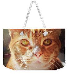 Percy In The Sun Weekender Tote Bag