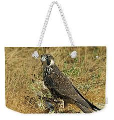 Peregrine Falcon Weekender Tote Bag by Doug Herr