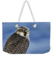 Peregrine Falcon Juvenile Close Up Weekender Tote Bag