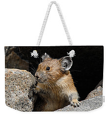 Pika Looking Out From Its Burrow Weekender Tote Bag
